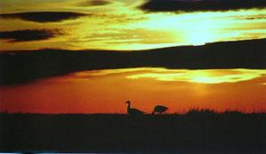 動物カメラマンの見た世界の自然・河和田の自然